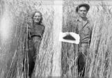 A couple standing in the wheat field on Fitzgerald farm, Sequim, WA, ca. 1930